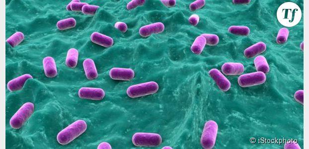 Une bactérie pour faire maigrir les obèses ?