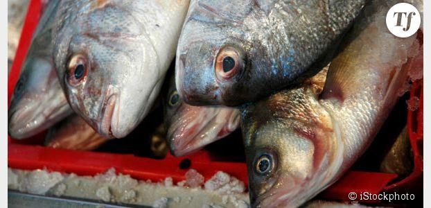 Farines animales : les poissons nourris au porc sont de retour