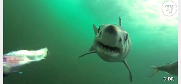 Une impressionnante attaque de requin filmée sous l'eau