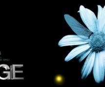 Fringe Saison 5 : voir les derniers épisodes de la série sur TF1 Replay