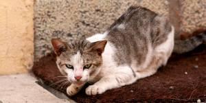 Une petite fille attaquée par une meute de chats à Belfort