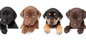 Royal Canin sponsorise un combat entre chiens et ours