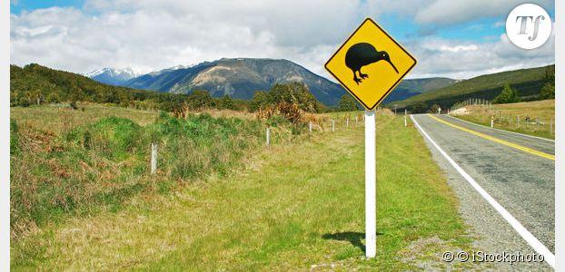 Code de la route : les oiseaux se comportent comme des radars ?