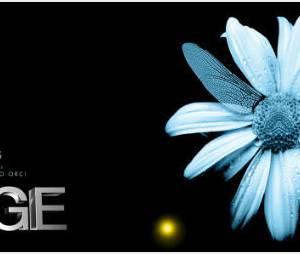 Fringe Saison 5 : fin de la série et pas de suite avec une saison 6 sur TF1