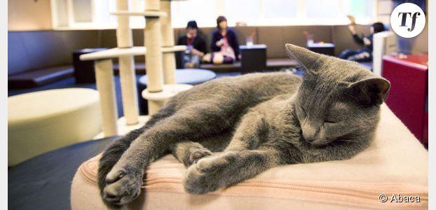 Café des chats : le bar rencontre le succès à Paris