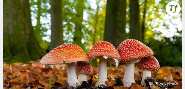 Comment reconna tre un champignon comestible terrafemina - Champignons secs comment les cuisiner ...