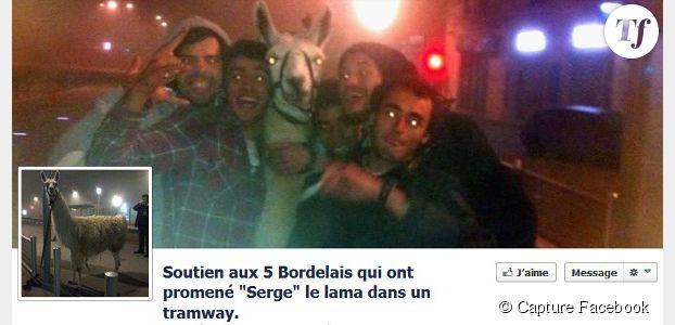 Serge le lama : parodies et buzz sur les réseaux sociaux