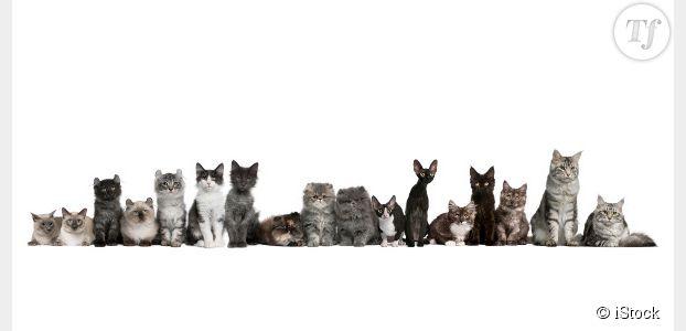 10 000 euros de récompense pour retrouver des chats disparus