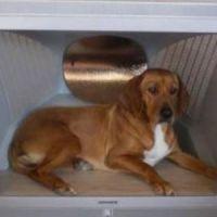 Le bon coin une niche high tech pour chien tr s originale - Niche pour chien originale ...