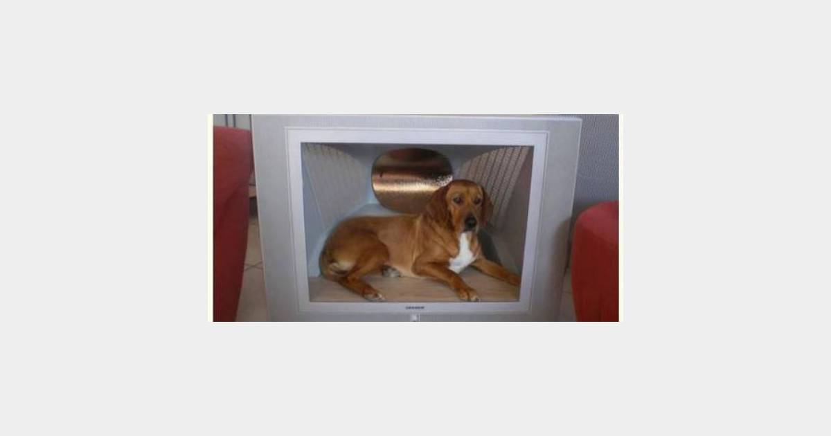 le bon coin une niche high tech pour chien tr s originale terrafemina. Black Bedroom Furniture Sets. Home Design Ideas