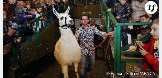 Serge le lama, la nouvelle icône publicitaire des transports en commun de Bordeaux