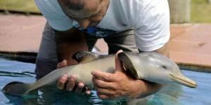 Brésil : des pêcheurs sauvent un bébé dauphin coincé dans un sac plastique – vidéo