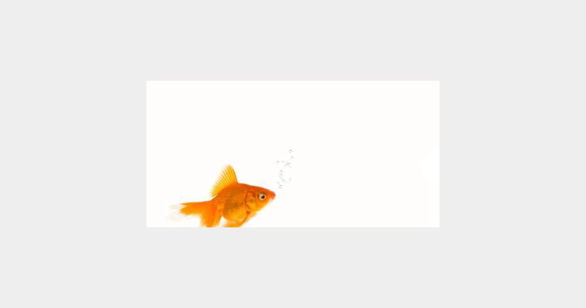 Le bon coin annonce hilarante pour un poisson pas rouge for Bassin a poisson le bon coin