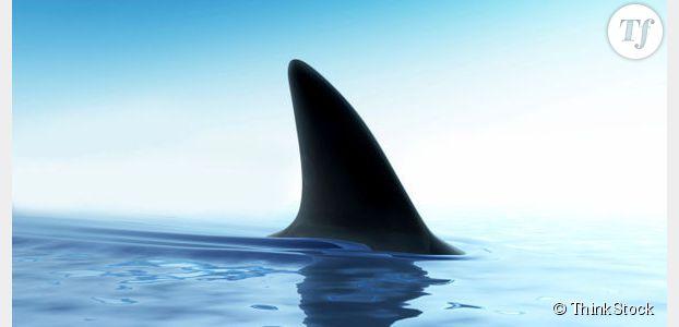 Requin blanc : une espérance de vie XXL