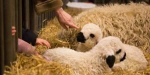 Pour Hollande, les animaux doivent rester des biens meubles