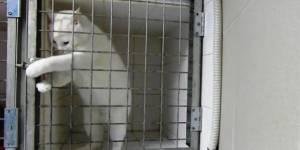 Chamallow : le chat roi de l'évasion à Marseille