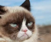 Grumpy Cat, nouvelle star de Vogue US