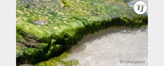Bretagne : deux fois plus d'algues vertes qu'en 2010