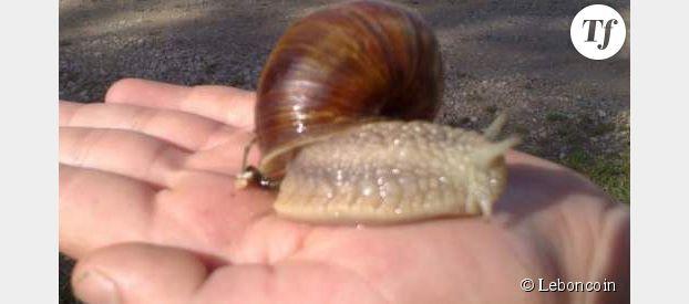 LeBonCoin : annonce totalement délirante pour des escargots de course