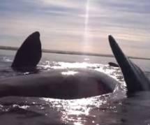 Une baleine s'amuse à soulever des kayakistes en pleine balade – vidéo