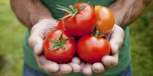 Le burger de tomates, on vous explique tout en moins de 4 minutes – Vidéo