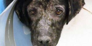 Etats-Unis : un patient hospitalisé retrouve la forme après la visite de son chien - en vidéo