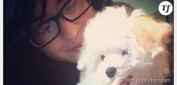 Demi Lovato : son adorable chien Buddy à son compte Twitter