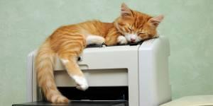 Au Japon, venir au bureau avec son chat peut rapporter 35 euros par mois