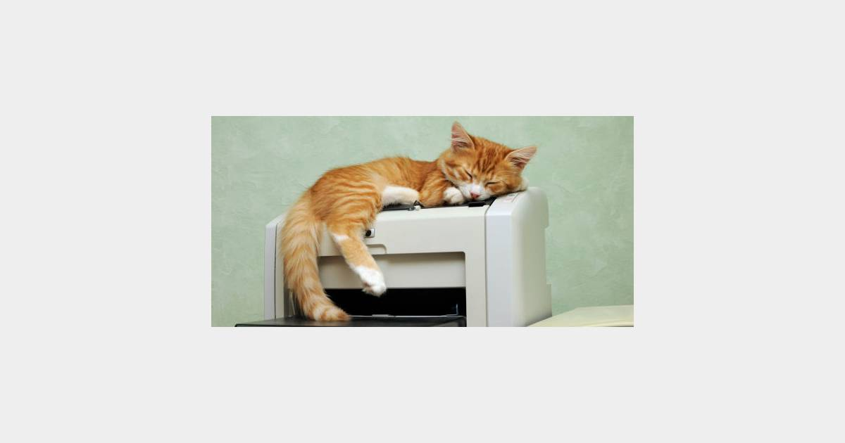 Au japon venir au bureau avec son chat peut rapporter 35 euros par