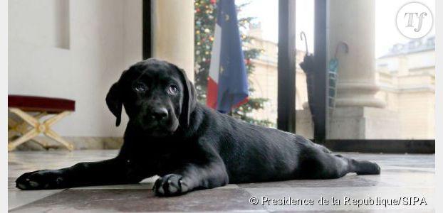 François Hollande : son chien Philae fait encore des bêtises