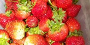Charlotte rapide aux fraises (weight watchers)