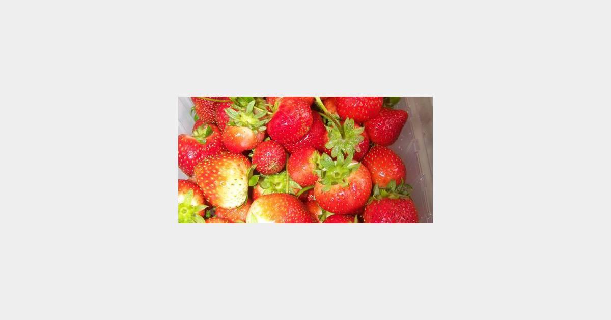 Charlotte rapide aux fraises weight watchers terrafemina - Jeux de charlotte aux fraises cuisine ...