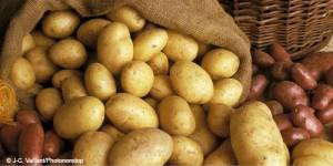 Recette concours: salade de pomme de terre au camembert
