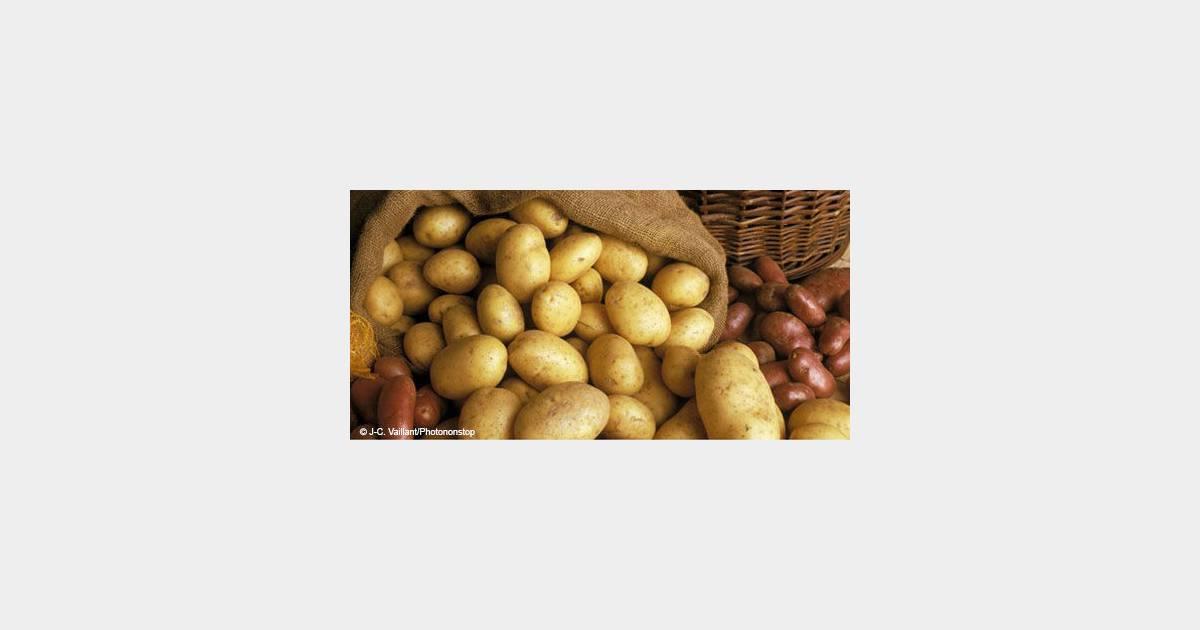 Recette concours salade de pomme de terre au camembert terrafemina - Mont d or preparation ...