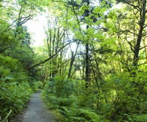 La forêt, le nouvel investissement à la mode