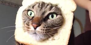 Les vidéos de chat ? Excellentes pour l'humeur, moins pour la productivité