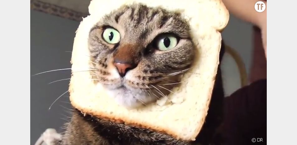 L'un des chats les plus célèbres de la Toile