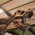 Squelette de dinosaure à l'Institut royal des sciences naturelles de Belgique.