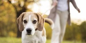 Faire semblant de s'évanouir devant son chien : le test-vérité qui buzze