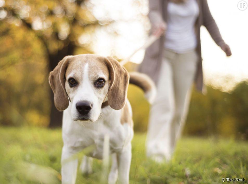 N'espérez pas trouvez du soutien de la part de votre chien, si vous vous évanouissez en pleine rue...