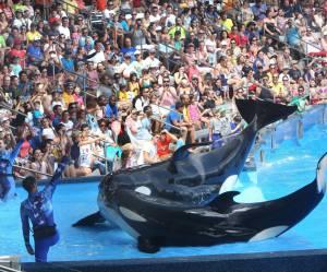 Pourquoi il faut boycotter les parcs aquatiques