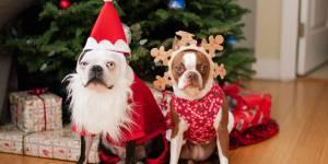Pourquoi déguiser son animal à Noël est une très mauvaise idée