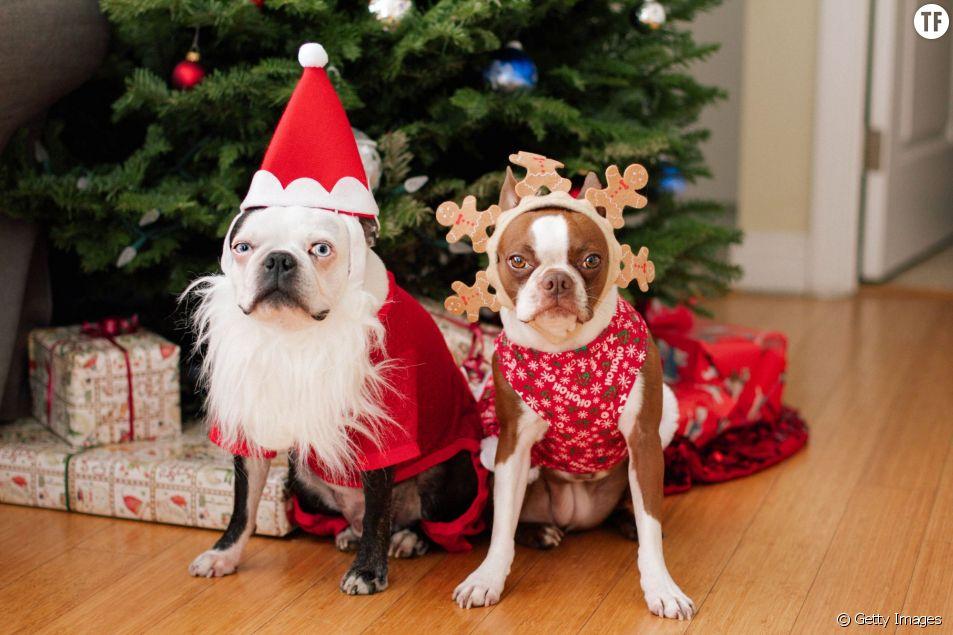 Déguiser son chien à Noël ? Une mauvaise idée !