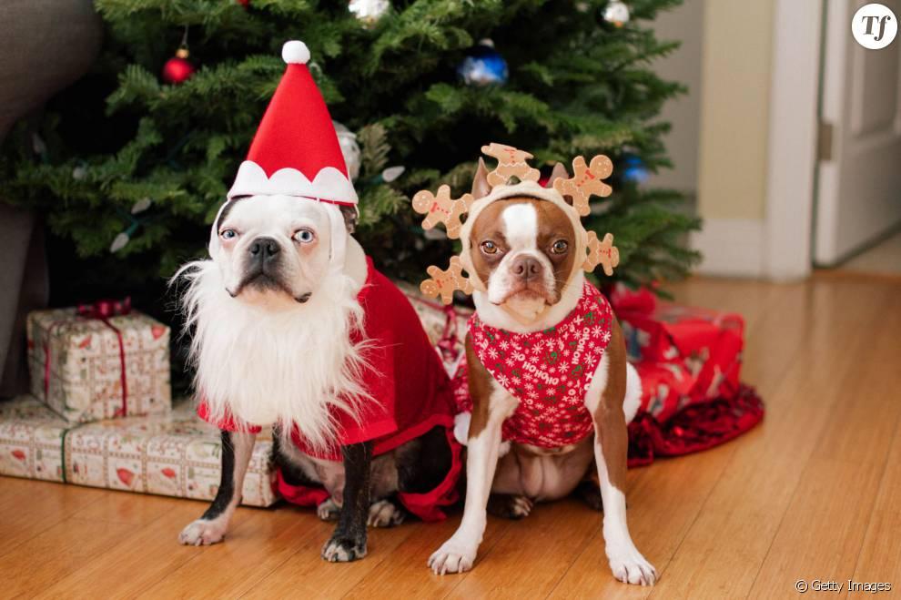 chien de noel Déguiser son chien à Noël ? Une mauvaise idée !   Terrafemina chien de noel