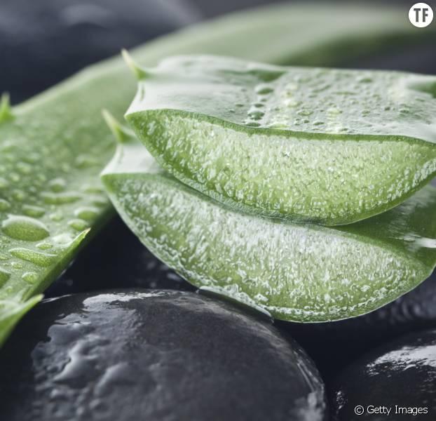 Le gel d'Aloe vera a de multiples usages, tous plus étonnants les uns que les autres.