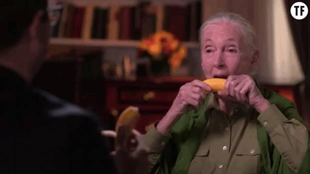 Une bonne petite banane pour digérer en toute tranquillité.