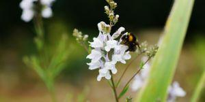 Un prix Nobel de la Paix et des abeilles à la Fondation GoodPlanet