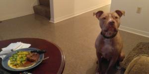 Elle dézingue la culture du viol avec une photo de son chien