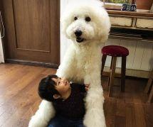 Cette fillette et son caniche géant sont ce que vous verrez de plus mignon aujourd'hui