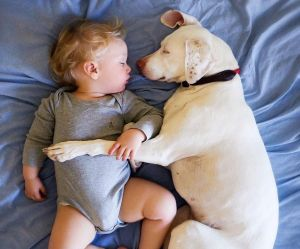 Cet ex-chien battu a peur de tout sauf de ce petit garçon